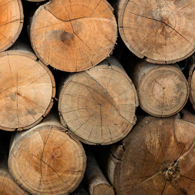 Leading Tree Services In Western KS