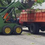 Tree Services Cleanup
